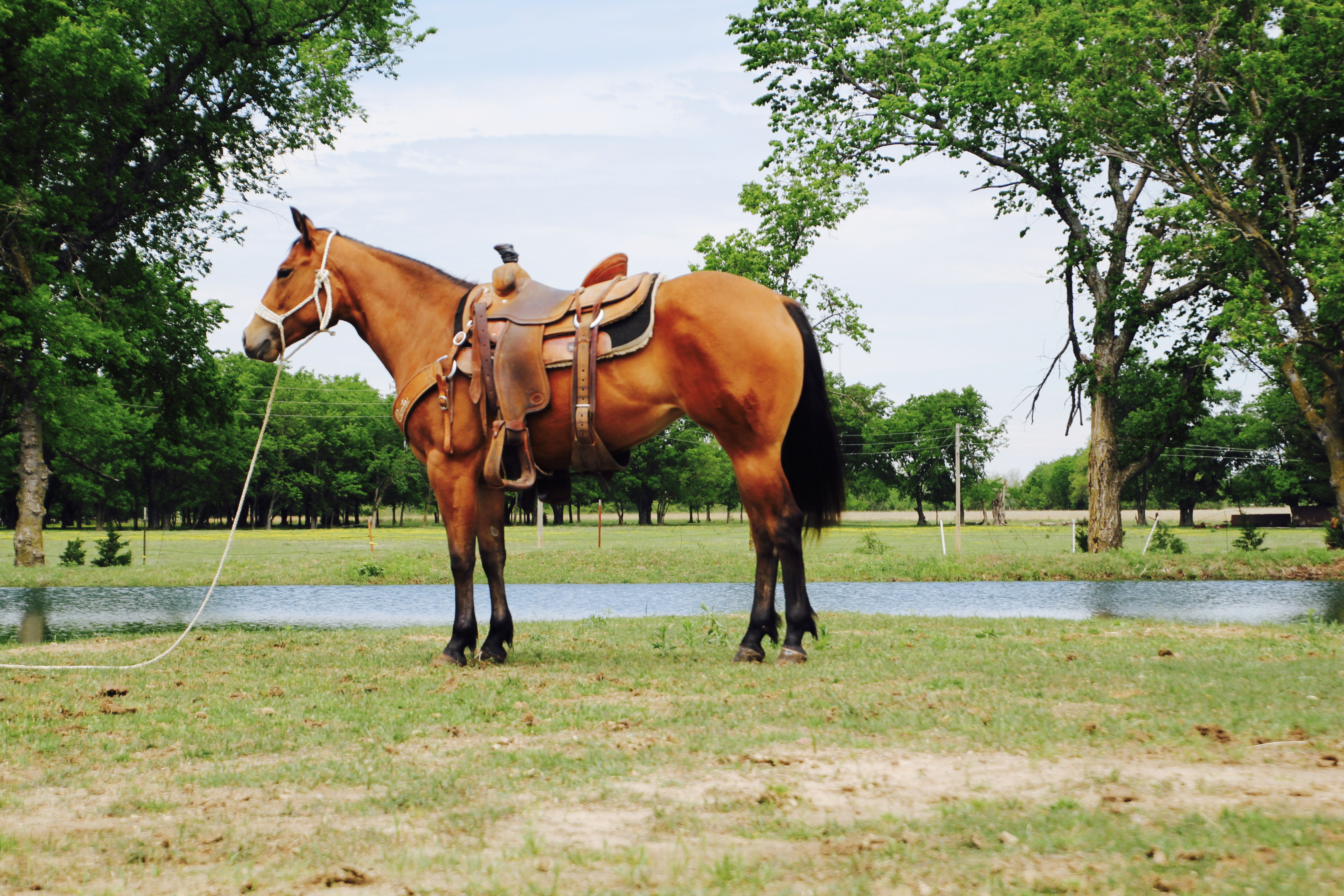 6cbcc53f8c35 COLTS & MARES | Dixon Flowers Rope Horses